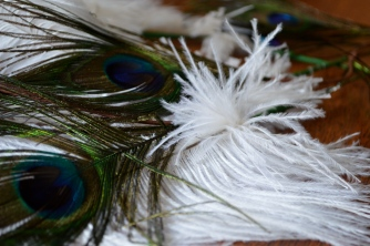 Feathers, feathers, and more feathers!
