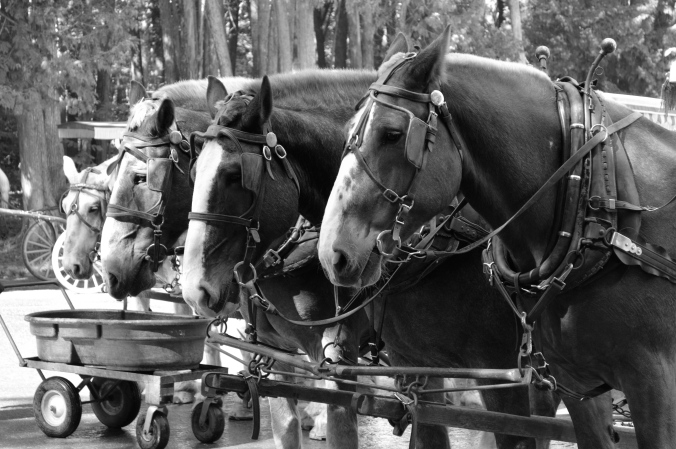 Horses pulling a carriage.