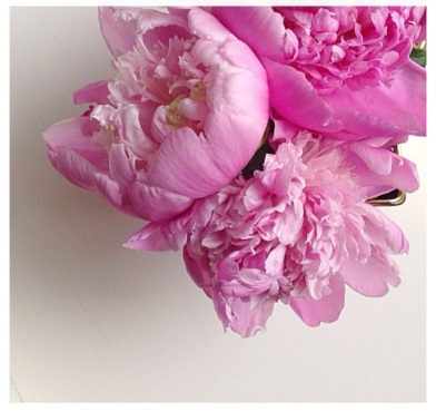 Peony aka you-make-me-smile-and-are-so-pretty.